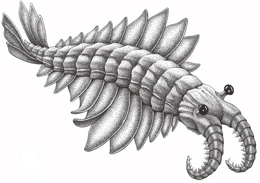 Anomalocaris_by_aaronjohngregory-d5k7bu1